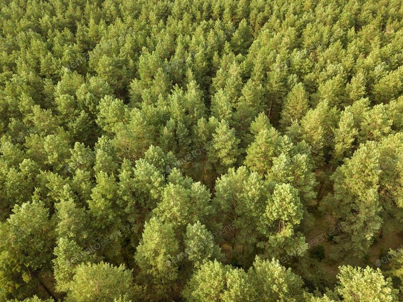 c02-bomen